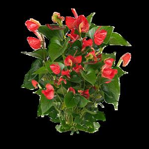 Plants PNG Photos PNG Clip art