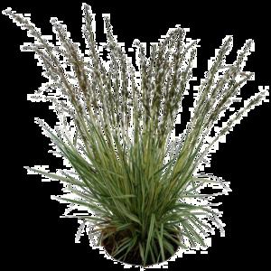 Plants PNG Pic PNG Clip art