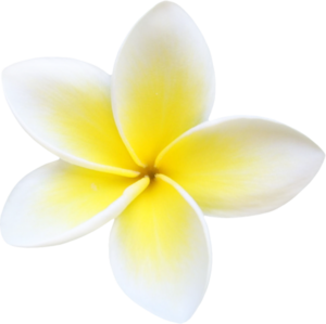 Plumeria PNG File PNG clipart