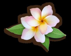 Plumeria PNG HD PNG Clip art