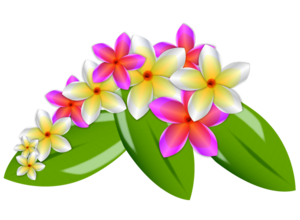 Plumeria PNG Image PNG Clip art