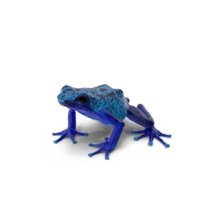 Poison Dart Frog Background PNG PNG Clip art