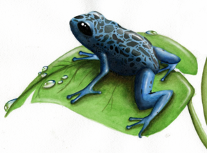 Poison Dart Frog PNG Clipart PNG Clip art