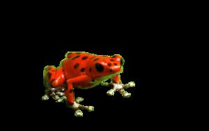 Poison Dart Frog PNG Free Download PNG Clip art