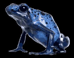 Poison Dart Frog PNG Image PNG Clip art