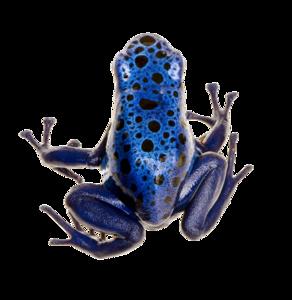 Poison Dart Frog PNG Photo PNG Clip art