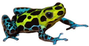Poison Dart Frog PNG Pic PNG Clip art
