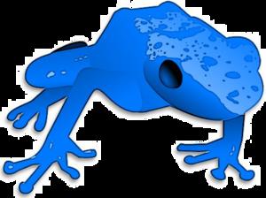 Poison Dart Frog PNG Transparent PNG Clip art