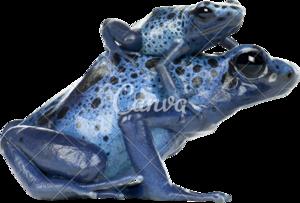 Poison Dart Frog Transparent PNG PNG clipart
