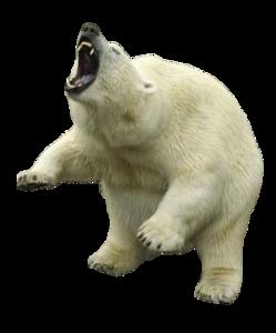 Polar Bear PNG Clipart PNG Clip art