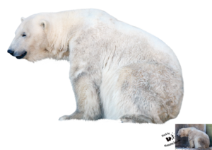 Polar Bear PNG File PNG Clip art