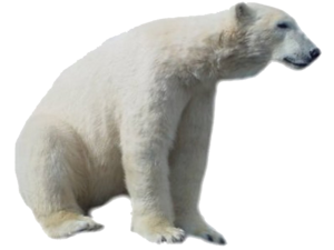 Polar Bear PNG HD PNG Clip art