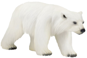 Polar Bear PNG Photos PNG Clip art