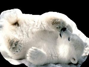 Polar Bear PNG Transparent Image PNG Clip art