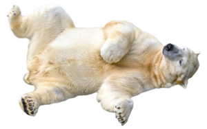 Polar Bear Transparent PNG PNG Clip art