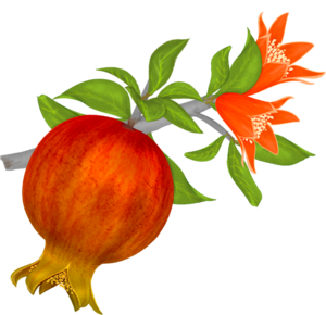 Pomegranate PNG File PNG Clip art