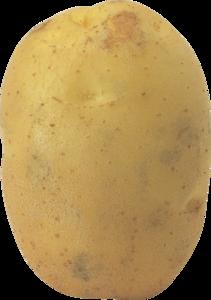 Potato PNG Photos PNG Clip art