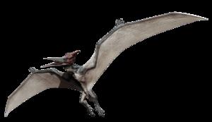 Pterosaurs PNG HD PNG Clip art