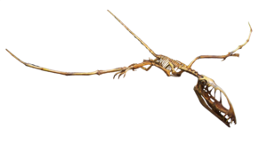 Pterosaurs PNG Pic PNG Clip art