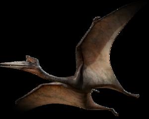 Pterosaurs Transparent Background PNG Clip art