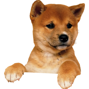 Puppy PNG Image PNG Clip art