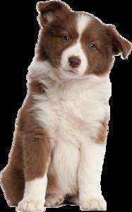 Puppy PNG Transparent Image PNG Clip art