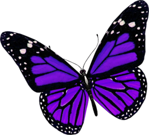 Purple Butterfly PNG File PNG Clip art