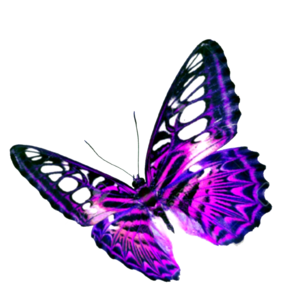 Purple Butterfly Transparent Background PNG Clip art