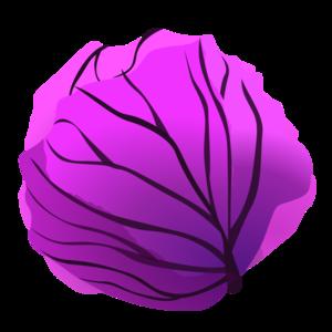 Purple Cabbage Clip Art PNG PNG images