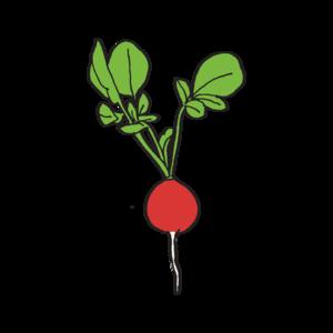Radish Download PNG Image PNG Clip art