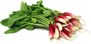 Radish PNG Free Download PNG Clip art