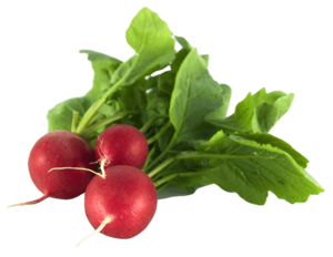 Radish PNG Picture PNG Clip art