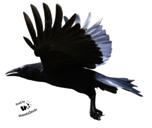 Raven Flying PNG Clipart PNG Clip art