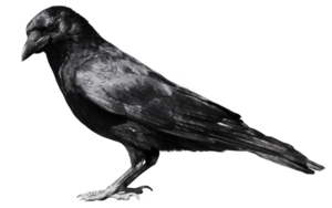 Raven Flying PNG File PNG Clip art