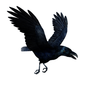 Raven Flying PNG HD PNG icon