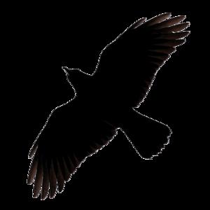 Raven Flying PNG Image PNG Clip art