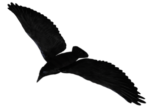 Raven Flying PNG Pic PNG Clip art