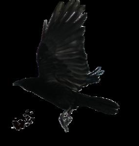 Raven Flying PNG Transparent Image PNG Clip art