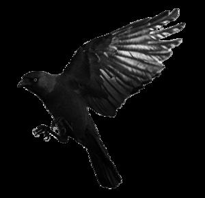 Raven Flying Transparent PNG PNG Clip art