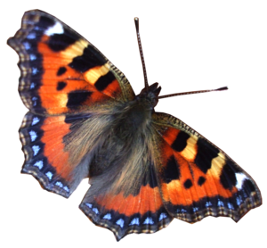 Real Butterfly Moth PNG PNG Clip art