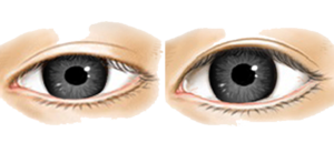 Real Eye PNG Clipart PNG Clip art