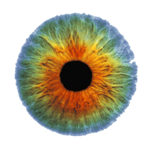 Real Eye PNG Image PNG clipart