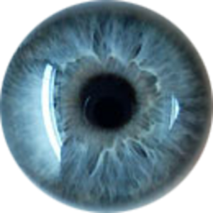 Real Eye PNG Clip art