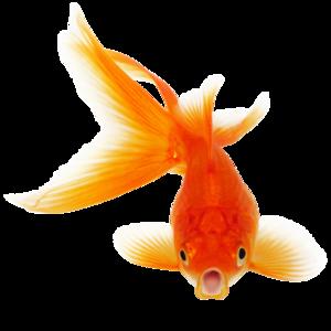 Real Fish PNG Clipart PNG Clip art