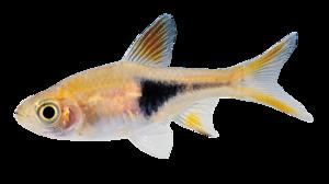 Real Fish PNG HD PNG icons