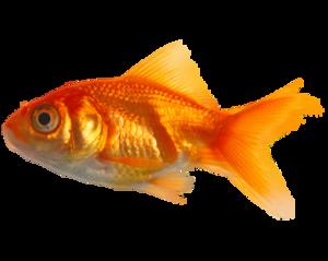Real Fish PNG Image PNG Clip art