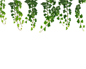 Real Leaves PNG File PNG Clip art