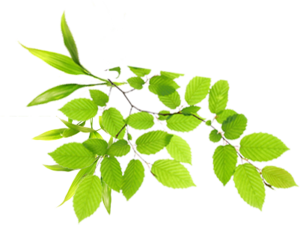 Real Leaves PNG Image PNG icon