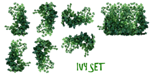 Real Leaves PNG Pic PNG Clip art