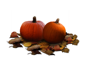 Real Pumpkin PNG Clipart PNG icons